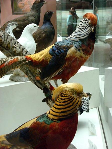 Дарвиновский музей