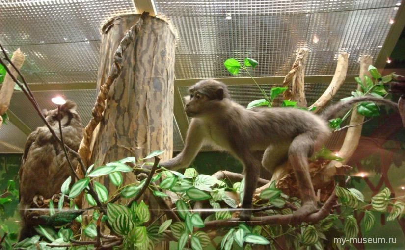 Животные Дарвиновского музея