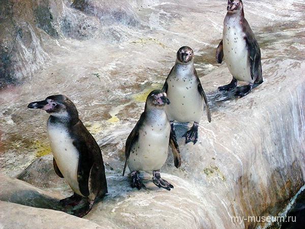 Московский зоопарк