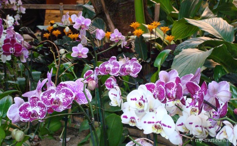 Орхидеи Аптекарского огорода
